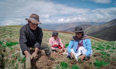 Minagri crea marketplace para agricultores