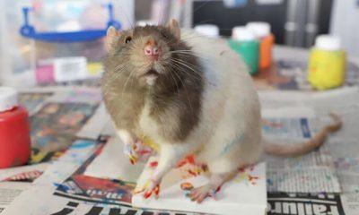 Cuadros dibujados por ratas expresionistas se vuelven tendencia