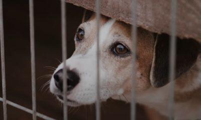 Esta acción compara la dura realidad de animales en albergues con el confinamiento a causa del COVID-19
