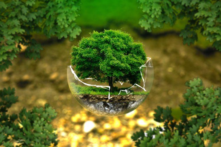 La unica certificadora ambiental estará en el Perú