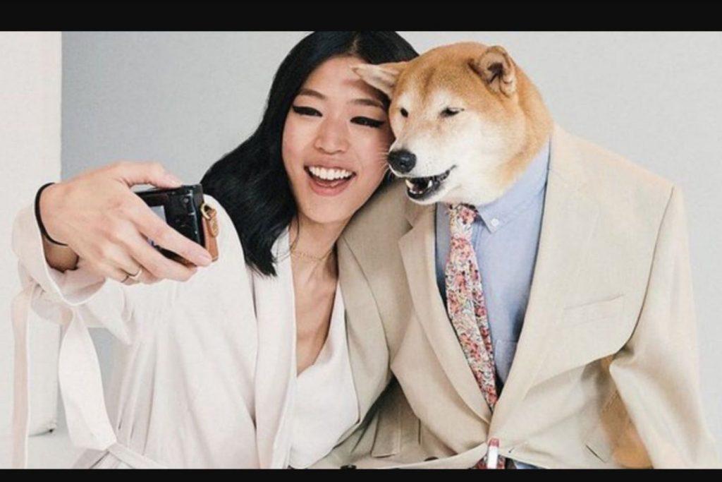 Meme de un perro